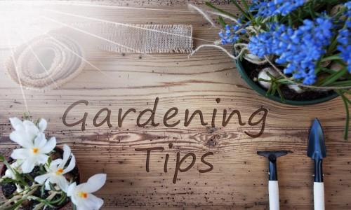 Summer gardening advice